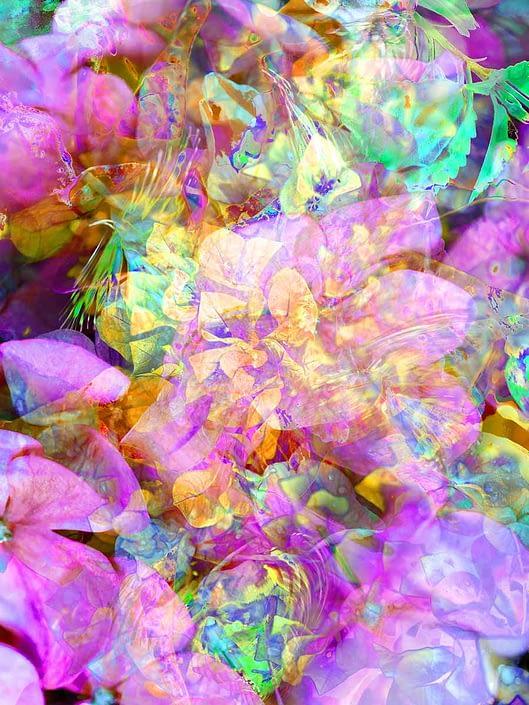 blossomsblossoms-pink stanko mystical photo