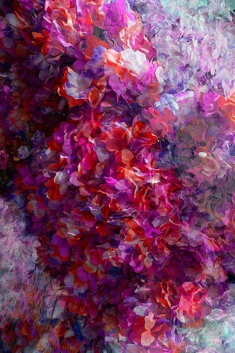all portugal blossoms - stanko mystical photo
