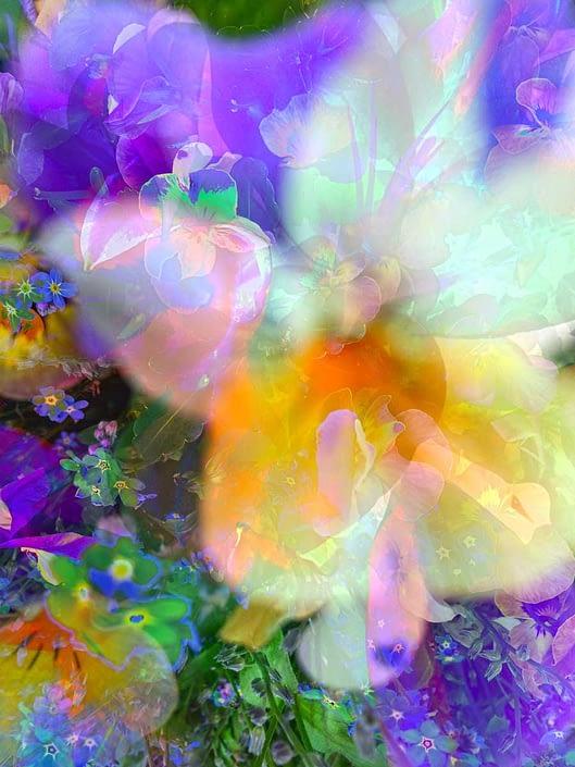 lilies & dairies