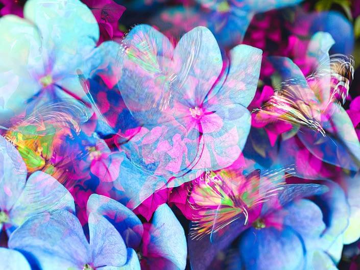 blossoms mariposa stanko mystical photo